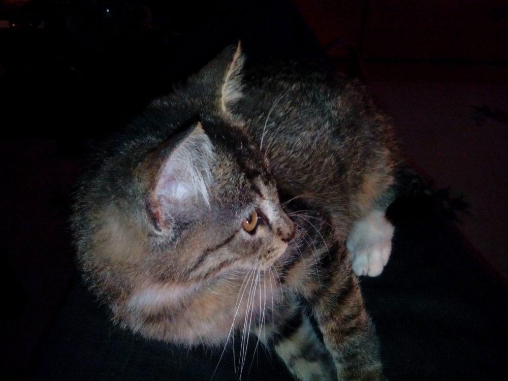gatos 10